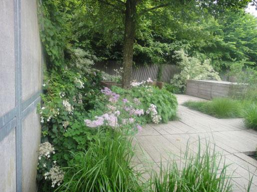 Foto: elegrass. - Gräser schaffen weiche und charmante Übergänge zwischen harten Kanten wie Mauern und Wegen oder wie hier zu einem Holzpodest.