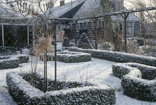 Foto: BGL.  Im Winter schlägt die große Stunde der immergrünen Gehölze.