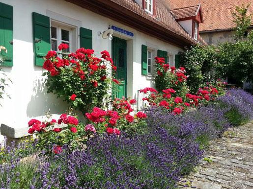 Lavendel und Rosen haben sich als Pflanzpartner gut bewährt. Neben ihrer Farbe und Bl¸tezeit passen auch ihre ätherischen Öle wunderbar zusammen.