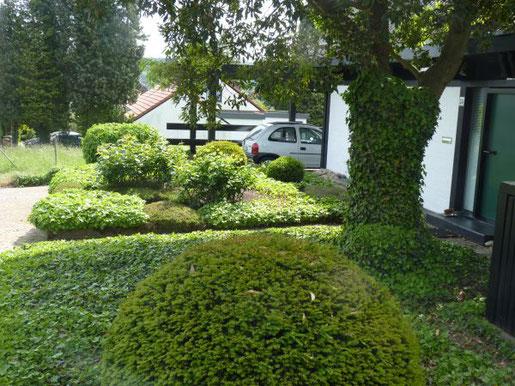 Foto: BGL. - Bodendecker breiten sich mit der Zeit flächig im Vorgarten aus und bilden eine dichte Pflanzendecke, in der wilde Gewächse kaum Platz zum Ansiedeln und Ausbreiten finden.
