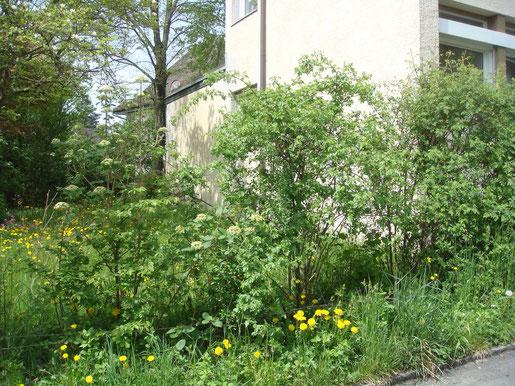 Einheimische Bäume und Sträucher sind für Vögel und Insekten bevorzugte Lebensräume im Siedlungsraum. Foto BirdLife Schweiz