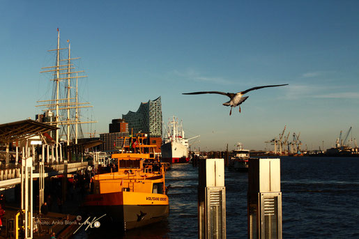 Hamburg / Elbe 2021. Foto (c)Anka Blank