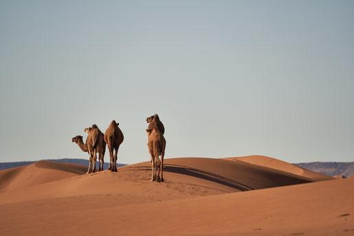 Märchen vom Scheich und den 17 Kamelen
