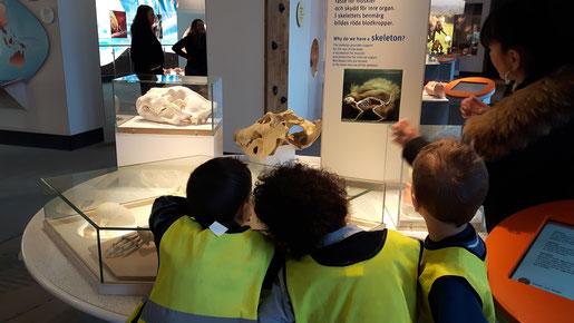 Kinder der Förskola entdecken den menschlichen Körper