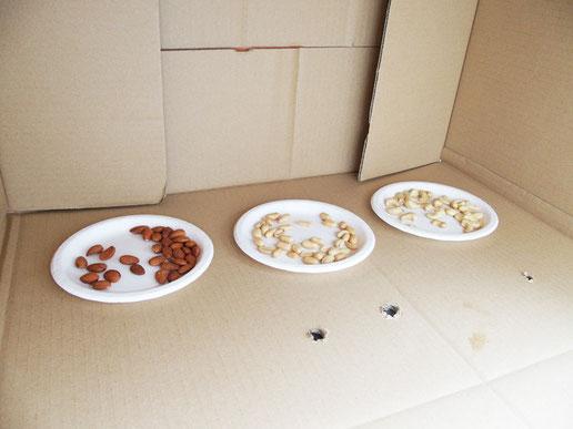 3種の豆をしかけ、ダンボールへおびき寄せる作戦