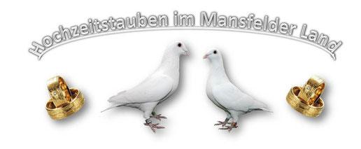 Hochzeitstauben Sachsen Anhalt Hochzeitstauben Hettstedt
