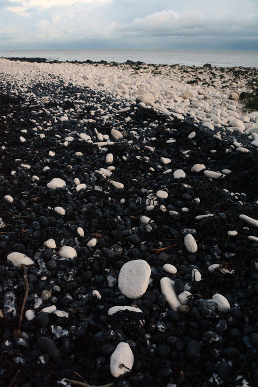 Black and white and blue all over. Seaweed, flints and chalk creating this banding effect down at St Margarets Bay in east Kent.