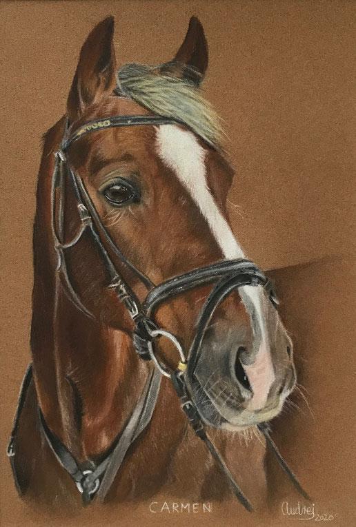 Pferd, Horse, Tier_Porträt, Animal_Portrait, handgezeichnet