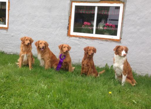 erfolgreiche Fährtenhunde: Indy, Mika, Sunnan, Joenne, Snö