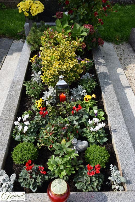 Grabgestaltung und Grabbepflanzung im Herbst. Beispiele und Ideen zum Selbermachen. Rote und weiße Cyclamen, gelbe Stiefmütterchen, Scheinbeere und Silberblatt