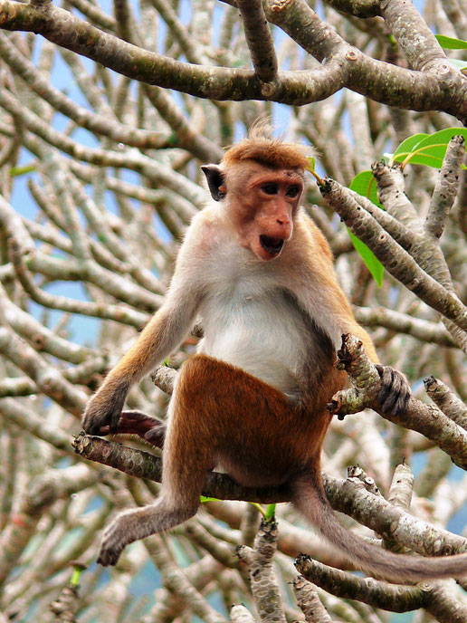 Spurenwechsler Reiseblog Reise TIP BLOG In der Spur Sri Lanka DambullaSchwarz Jörg Kultur Highlights