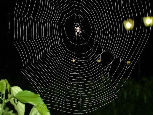 クモの巣、、妖しく美しく機能的、まさに完璧な物の形。