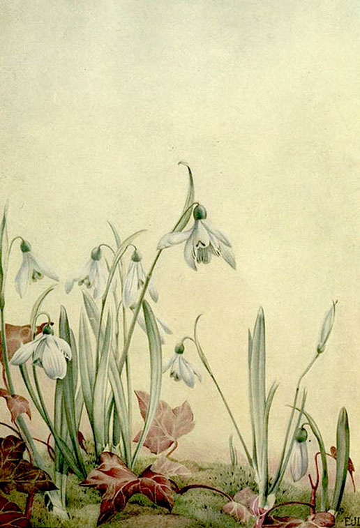 Maurice Maeterlinck, Galanthus nivalis, in News of Spring and Other Nature Studies, New York, 1917