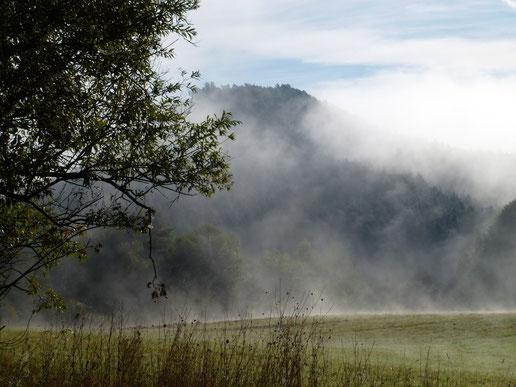 Morgendunst im Tal
