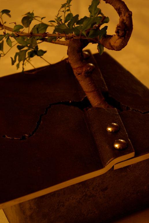 Bonsaipflanzschale Detailfoto