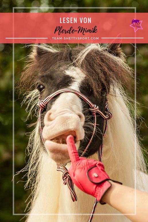 Shetlandpony Pferdemimik Pferdegesicht