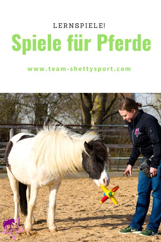 Lernspiele für Pferde - mit Pferden spielen: Auch Pferde können apportieren.