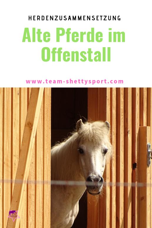 Alte Pferde im Offenstall und Paddocktrail: so kann auch ein altes Pferd artgerecht leben.