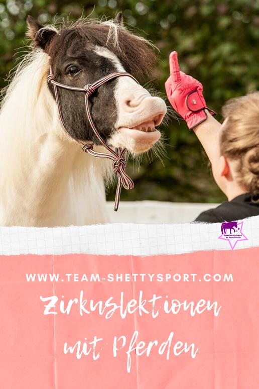 Ponys ganz groß: Originelle Beschäftigungsideen für kleine Pferde. DAS Buch rund um´s Pony! Damit Dein Pony kein Rasenmäher oder dicker Beisteller wird, zeigen wir Dir viele Übungen und Trainingsideen. So haben Du und Dein Pony garantiert viel Spaß!