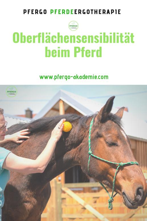 PFERGO Pferdeergotherapie - Ergotherapie für Pferde: Basissinne schulen.