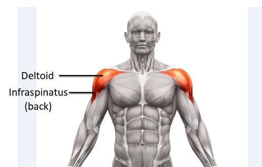 shoulder workout training schedule