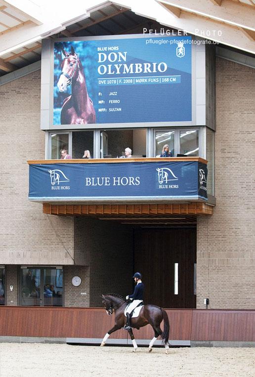 Blue Hors Reithalle modern und neu erbaut. Viel Licht von oben Hengstshow mit Blue Hors Don Olymbrio mit Reiter Daniel Bachmann Andersen