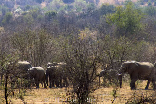 Elefantenherde im Pilanesberg Nationalpark