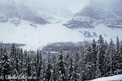 entlang des Icefields Parkway