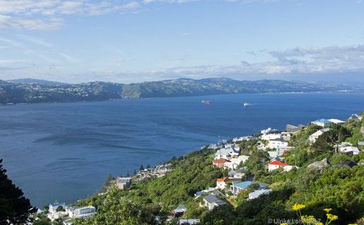 Ausblick vom Mount Victoria auf Wellington