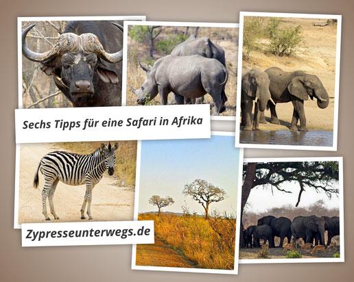 Sechs Tipps für eine Safari in Afrika