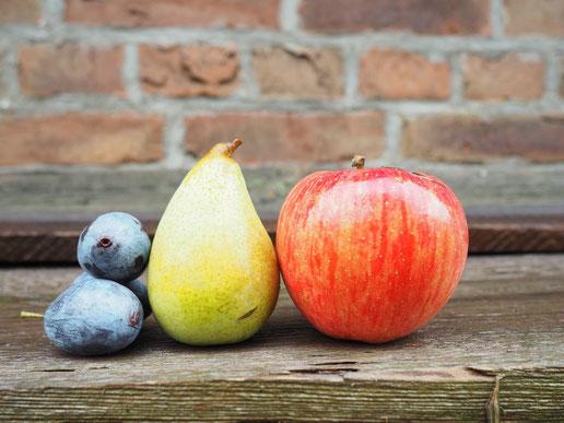 Erhaltung der genetischen Vielfalt, Auftragsveredelung, Alte erhaltungswürdiger Obstsorten, Genpool www.funke-pflanzen.de