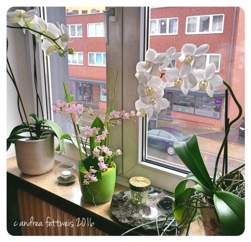 Fensterdekoration mit Orchideen und Windlichtern