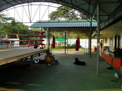WPT Gym Master Pimu