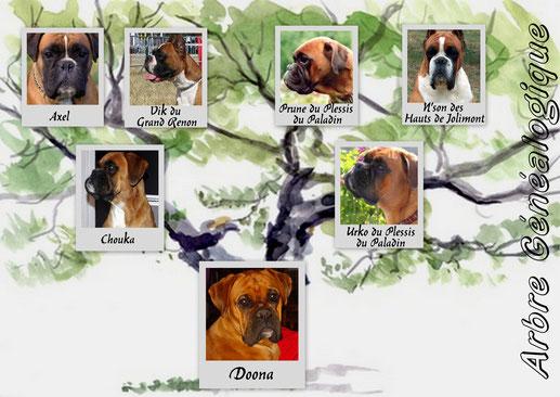 L'arbre généalogique de ma petite Doona (j'aurai peut être du lui demander l'autorisation :-)
