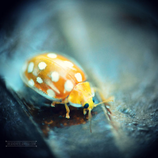Macro photo shot using two lenses