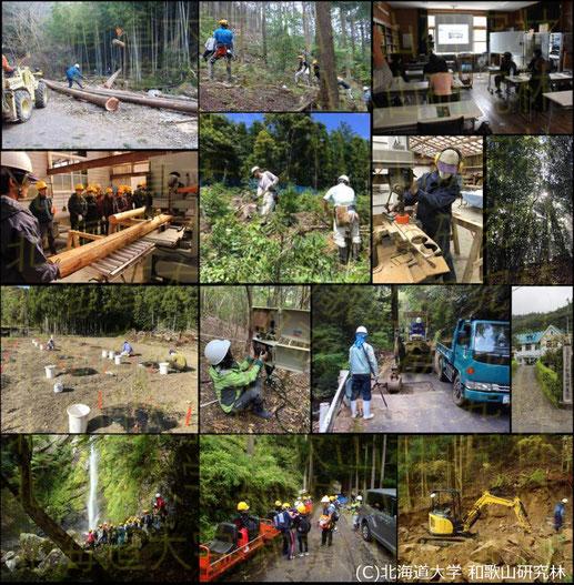 (※)和歌山研究林における業務内容の一例