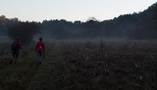 in 2018 's morgens nog wat dauw op de velden.
