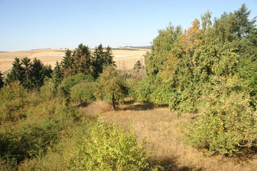 Grüne Insel in einer Agrarlandschaft; September 2018