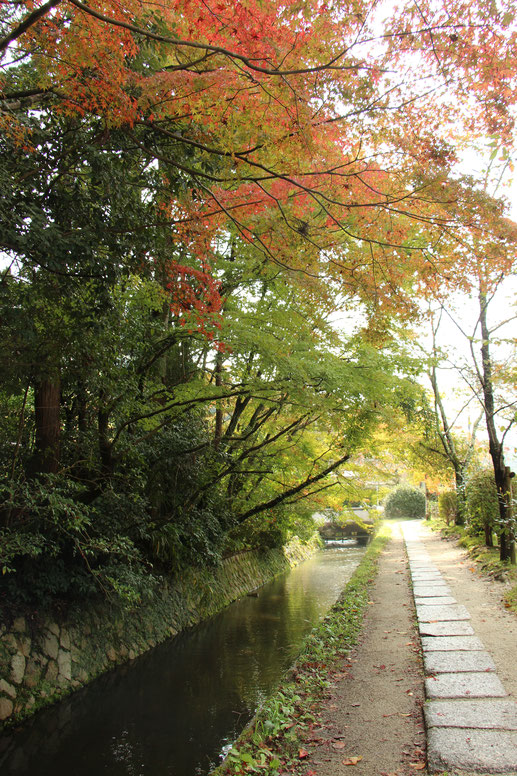 Kyoto - 7 Day Itinerary For Active Families with Small Kids - A Walk Along the Philosopher's Path