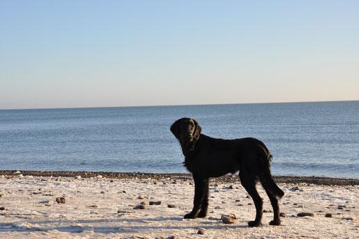 Fitch und das Meer :-)