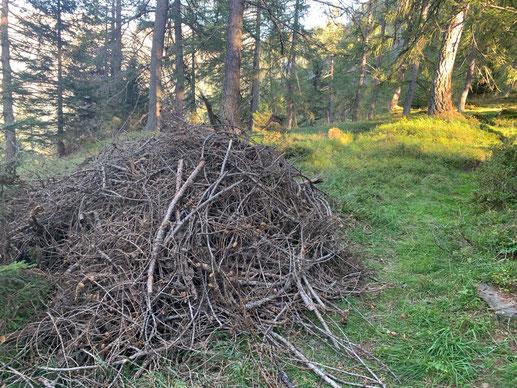 Dieser Asthaufen wurde von einer Klasse geschichtet. Auch Sie können in diesen Wäldern Ihren Arbeitseinsatz leisten.