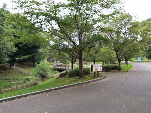演奏後、ちょっと会場の周りをお散歩☆こんな緑が綺麗な会場です♪