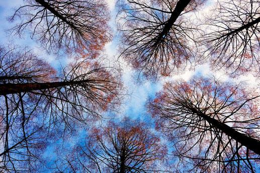 arbres ciel