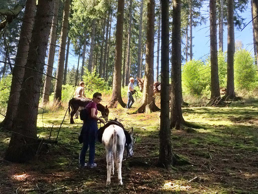 Eselwanderungen in Bad Berleburg, Naturpark Sauerland-Rothaargebirge