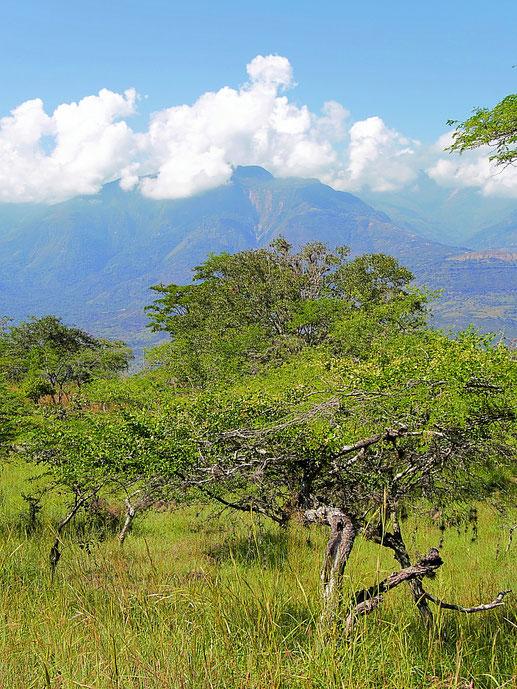 Kolumbien? Oder eher eine afrikanische Landschaft? Barichara, Kolumbien (Foto Jörg Schwarz)