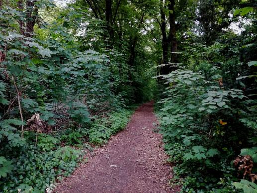 Wirklich nur ein einsamer Trampelpfad im Wald? (Foto: J. Frick)