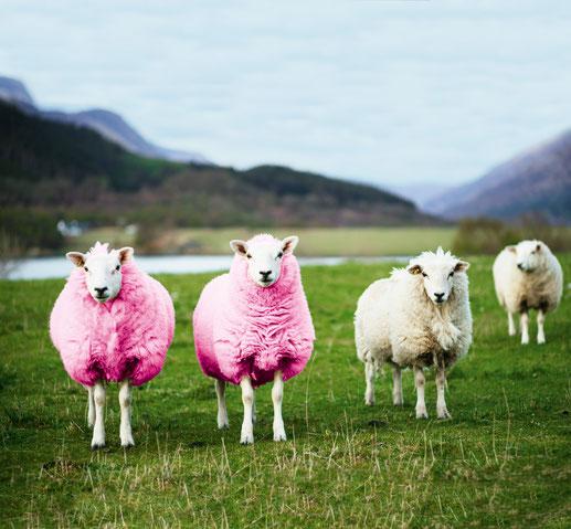 Hochwertige Wolle, Lana Grossa