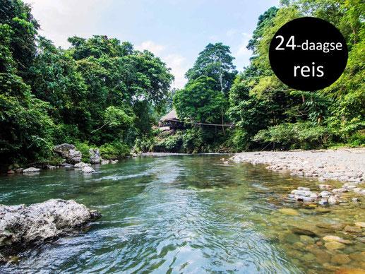 Kabbelende rivier in het in de jungle gelegen Tangkahan