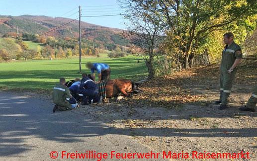 Feuerwehr; Blaulicht; BFKDO Baden; FF Maria Raisenmarkt; Pferd; Vorderfuß; Betonrohr;