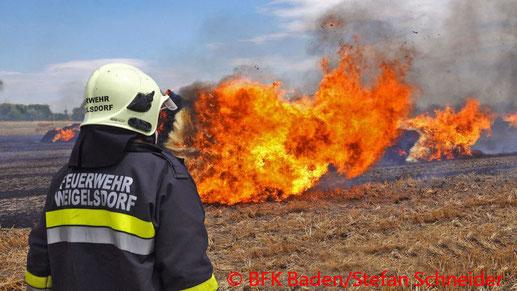 Feuerwehr, Blaulicht, BFKDO Baden, Brand, Feld, Strohballen, Weigelsdorf